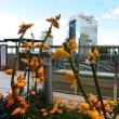 大阪駅のお花畑