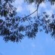 蝉の声なし 空は秋 虫の声爽やか 国連の声