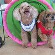 明日の【ALOHA塾】は、 未病ケアの《Dogscan》  犬のしつけ教室@アロハドギー