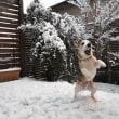 大雪だわん