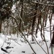 駒の尾山で初スノーシュー