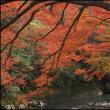 青井岳の紅葉は見頃