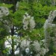 森は花盛り
