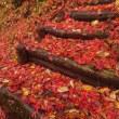 11月6日 上会津屋周辺の紅葉情報