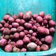 秋植えジャガイモ