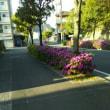 夏がきた~~