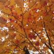 最近の景色 絵画みたいな秋