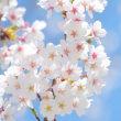 春です!!!(宮路)