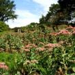 赤城自然園、9月の花