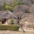 梅林に囲まれた薬師池公園の古民家