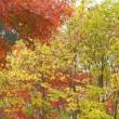 高原の秋・・山添めえめえ牧場