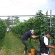 ■知恵蔵 丹波ワイナリーにて収穫&バーベキュー