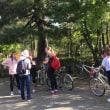 京都と外国人と自転車