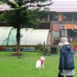 嵐の山中湖⑦(太田さんの絶品オムレツ)