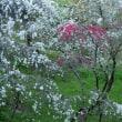 上中の花桃