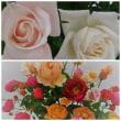 薔薇の香りにいやされて♫