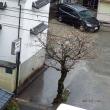 2018年03月16日(金曜日) 小雨 のち、曇り。 夕刻、晴れ。 暖かい朝。。