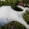 今朝は霜が降りてました