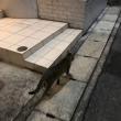 神戸 逃げるんだが 猫
