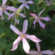 5分割する花