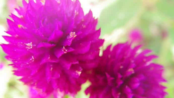 ウォーキングコースの花々