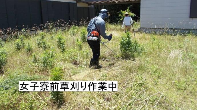 草刈り(竹刈り)を行いました。