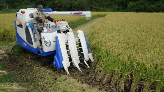 今年も稲刈りが始まりました