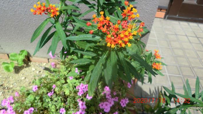 街角に咲く花✿街角ぶらり旅07-24
