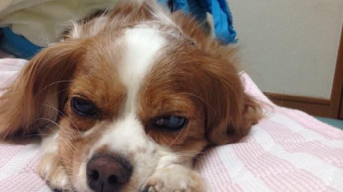 うちの犬がかわいすぎてどうしよう
