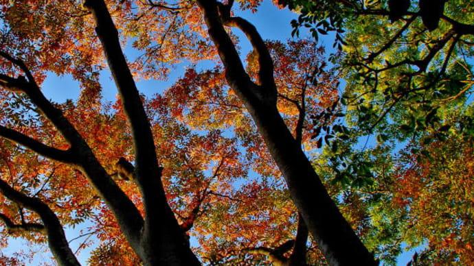 色付く木々