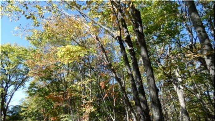 森の紅葉 ( 10/18日 )。