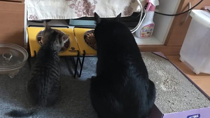 今朝の猫猫ベストショット