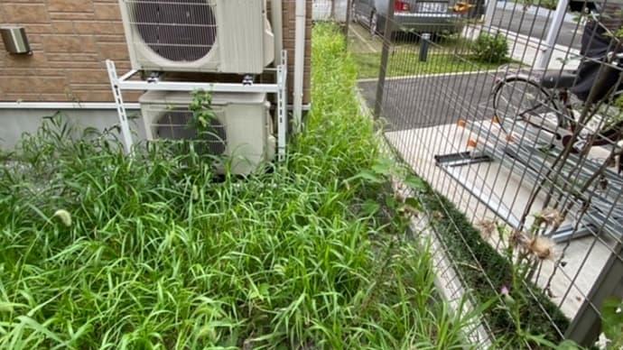 西蒲田で草取り 新宿区の植木屋 鈴木商店のブログ