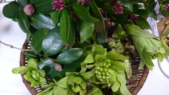 香りの良い沈丁花
