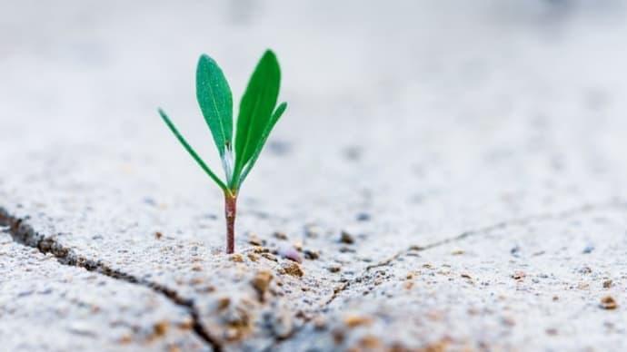 今から種を蒔いておく。【年収減だけじゃない! 大企業「赤字リストラ」で押し寄せる早期退職の波】