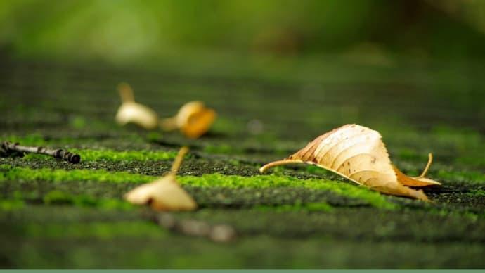 秋の訪れは、ひそやかに