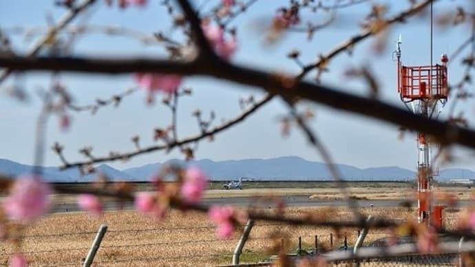 岡南飛行場 飛行機と河津桜