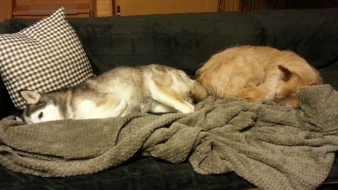 ラブとユノがソファーで!