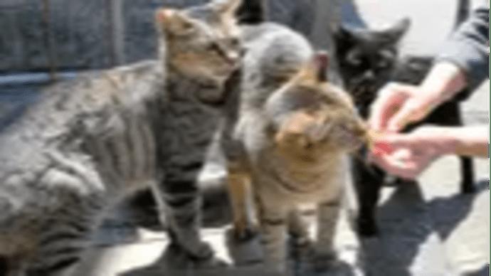 飲食店休業、野良猫もコロナ受難店前で待ち続ける猫も