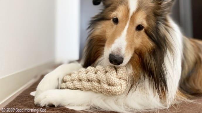新しいロープのおもちゃは、ちょっと大きさが…