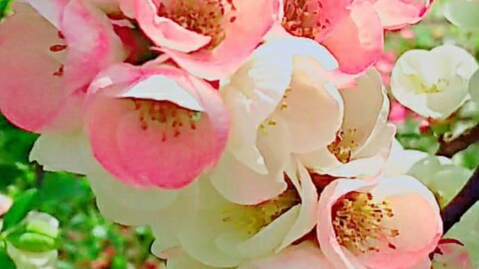 戴いた『梅まつば』で♡花びらパスタ♪