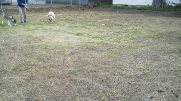 アスパラ公園の草刈