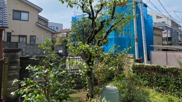中野区庭木剪定と夏の高校野球 新宿区の植木屋さん鈴木商店のブログ