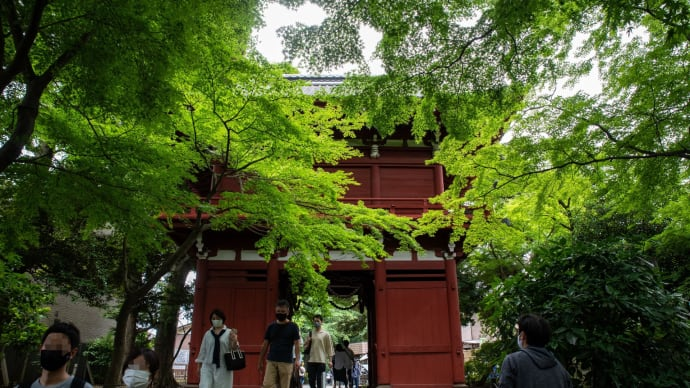 松戸のあじさい寺