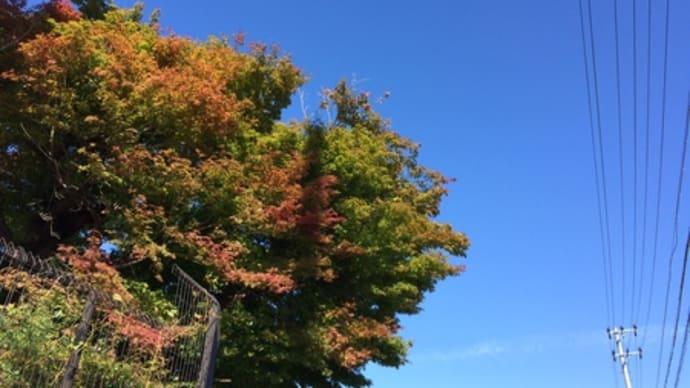 紅葉の始まり⁈