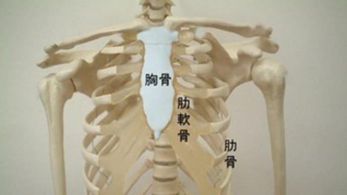 胸骨 ひび