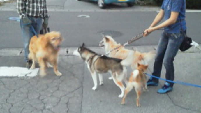 犬5頭と人間4人