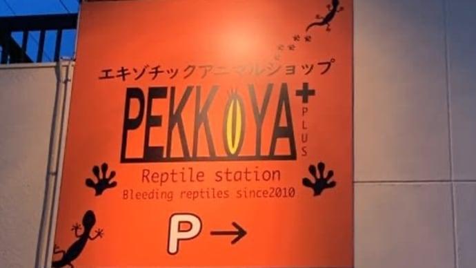 ペッコヤさん、お店やるってよ。