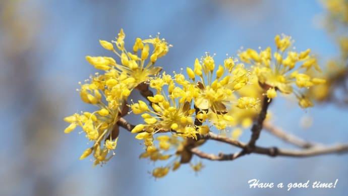 早春の光と風を感じて