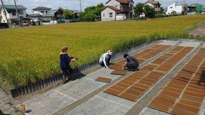稲作見習い